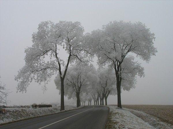 Les arbres  - Page 2 03cd918e
