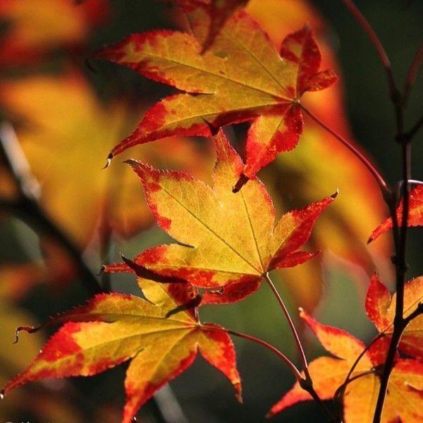 Les feuilles d'automne 06c958f6