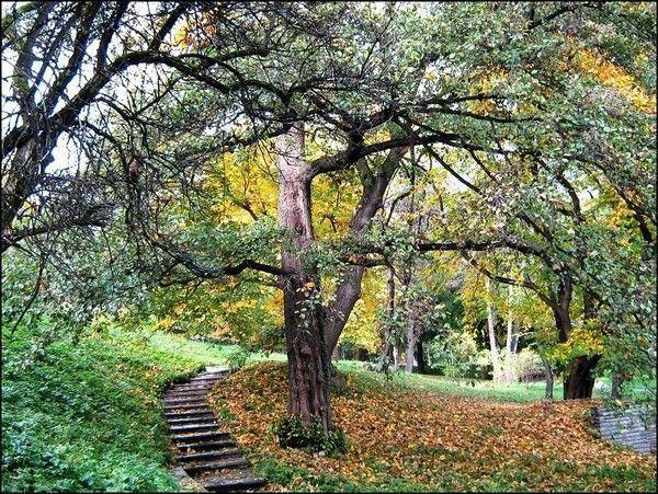Les arbres  077b966c