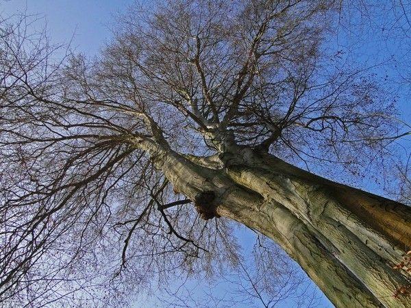 Les arbres  - Page 2 0e7f7055