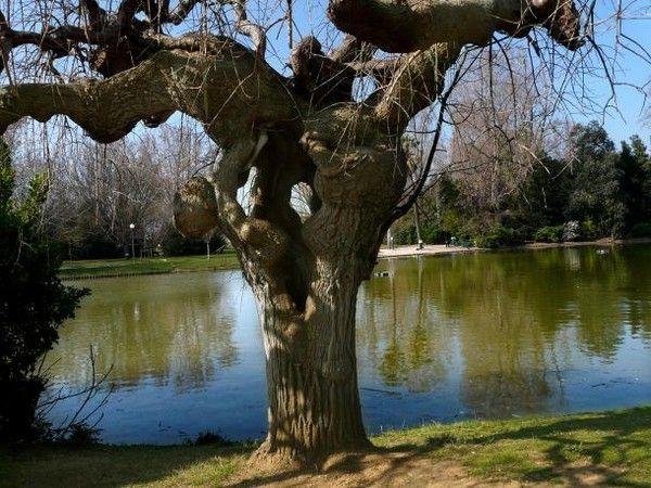Les arbres en général 15e7a811
