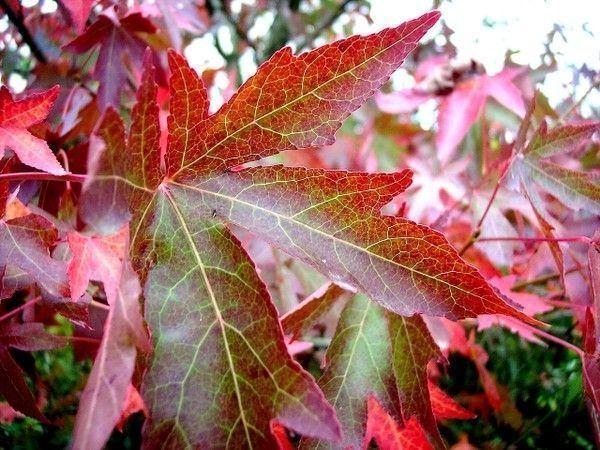 Les feuilles d'automne 20312fde
