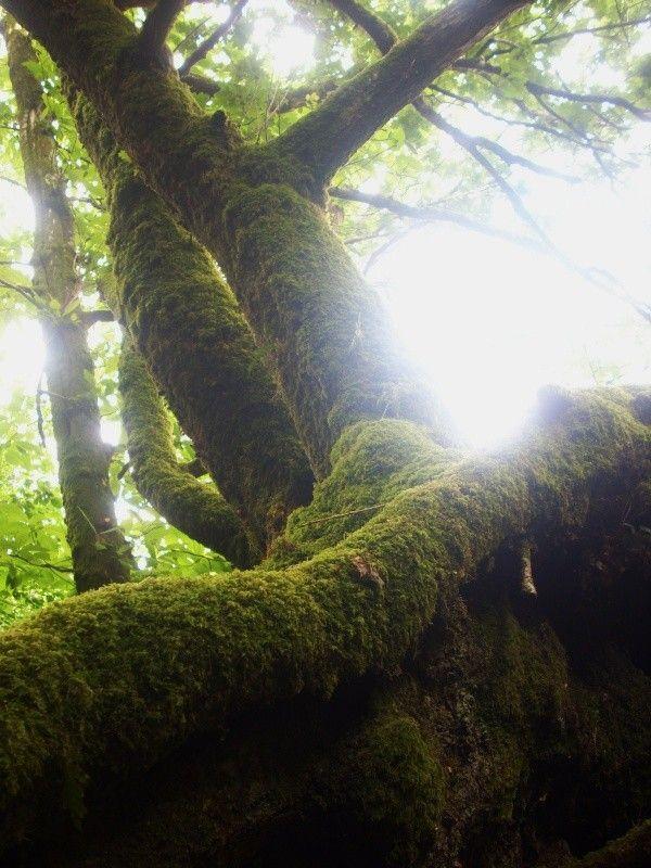 Les arbres  - Page 2 28a02668