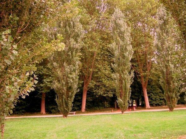 Les arbres  - Page 2 37c085ac