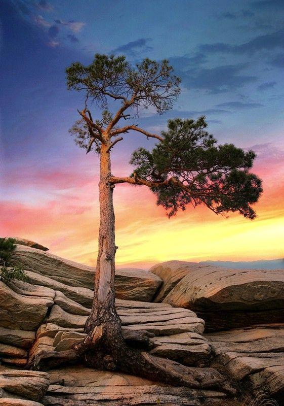 Les arbres  3846d0c4