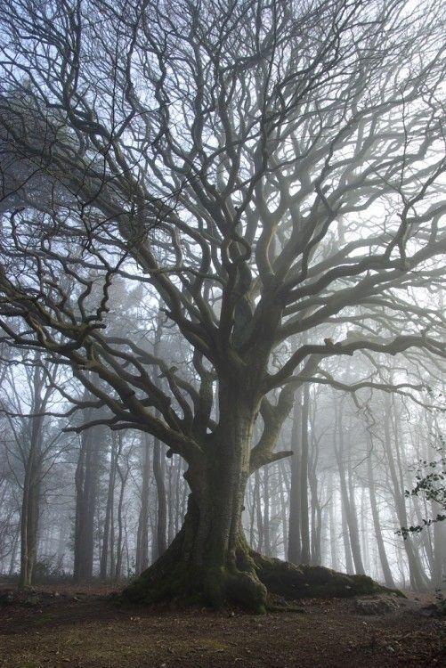 Les arbres  - Page 2 45d1667e