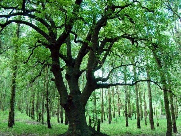 Les arbres  4b65197a