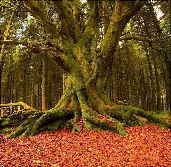Les arbres  5a847e22