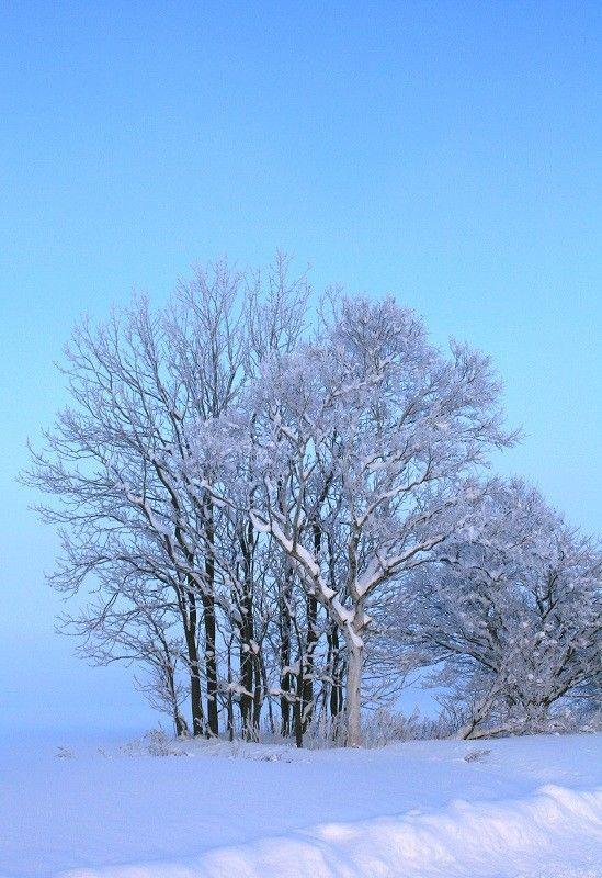 Les arbres  - Page 2 5dba6578
