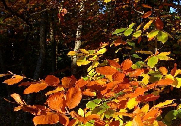 Les feuilles d'automne 95138f47