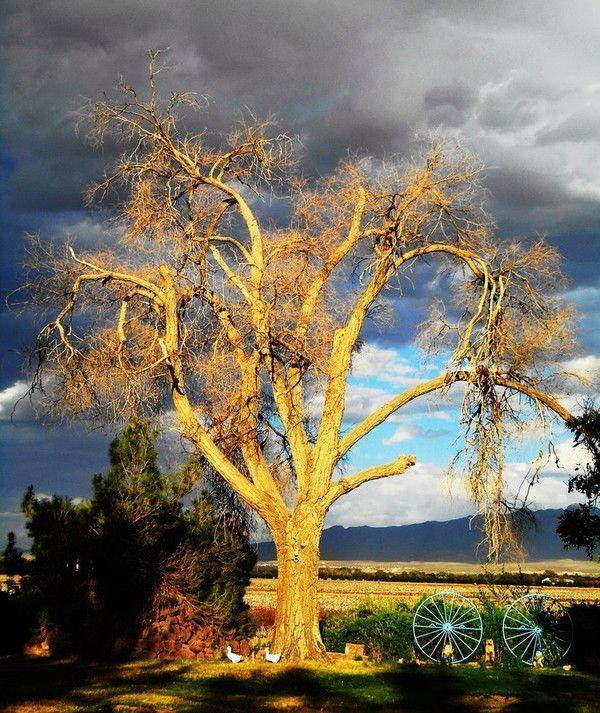 Les arbres  98a3861f