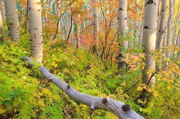 Les arbres  A5fbf845