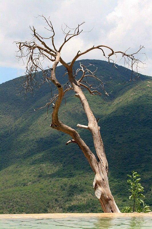 Les arbres  - Page 2 C34bd306