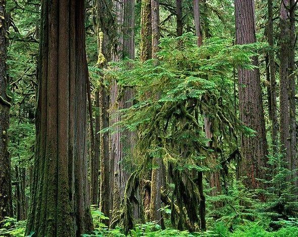 Les arbres  Cede91de