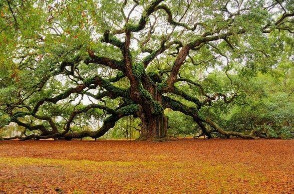 Les arbres  D9312c27