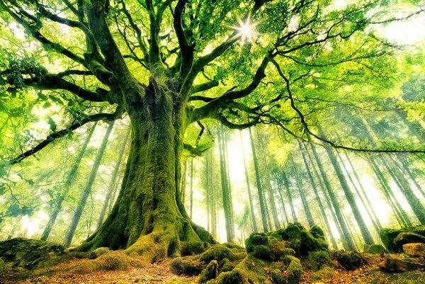 Les arbres  E0341337