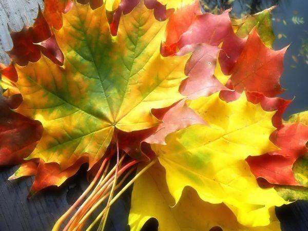 Les feuilles d'automne F22e14cd
