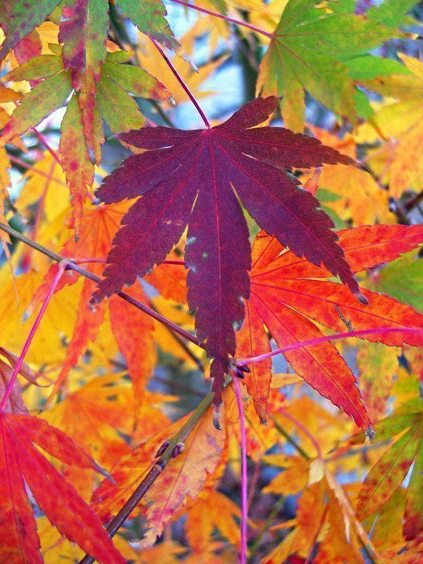 Les feuilles d'automne F7736be7