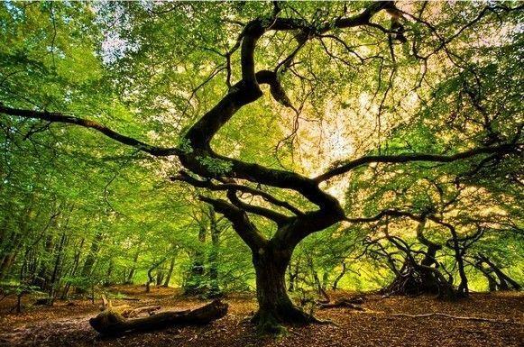 Les arbres  Fd35ec08