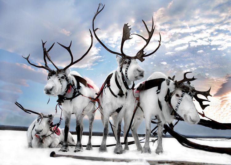 Les rennes for Les architecteurs rennes