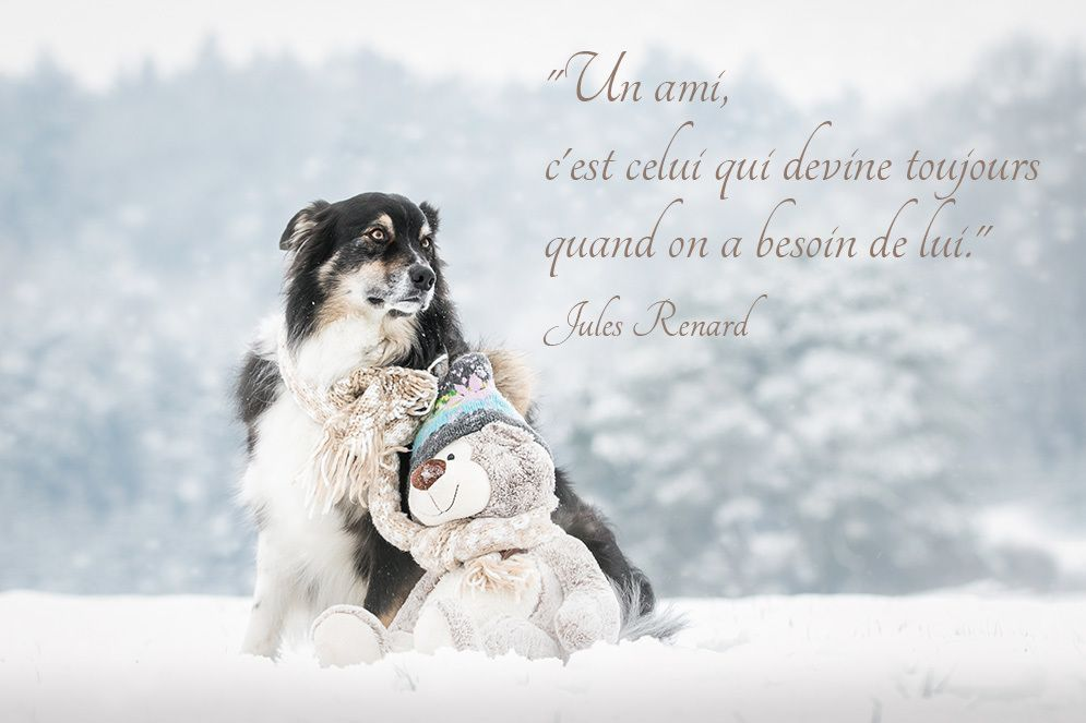 tendresse des animaux