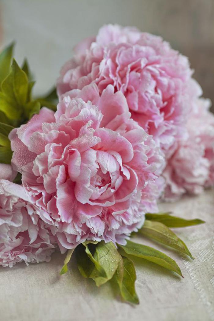 Fleurs for Bouquet de fleurs 7 lettres